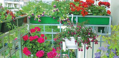 Ампельные растения особенно красиво